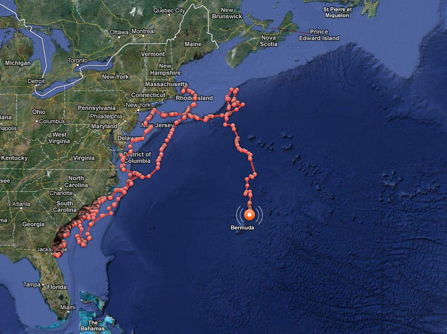 shark-tracking-ocearch-east-coast